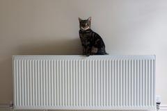 Junge Katze der getigerten Katze, die auf einen Heizkörper steht Lizenzfreie Stockfotos