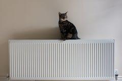Junge Katze der getigerten Katze, die auf einen Heizkörper steht Stockbilder