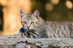 Junge Katze, die auf Betondecke liegt Lizenzfreie Stockfotos
