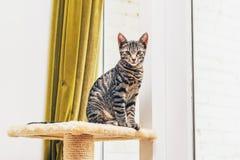 Junge Katze, die auf einem Sockel sitzt Stockfotografie