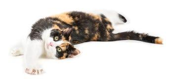 Junge Katze, die aus den Grund, lokalisiert im Weiß liegt Lizenzfreie Stockfotografie