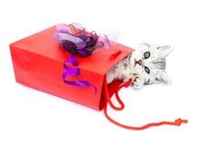 Junge Katze, die in der roten Tasche mit Dekoration liegt stockfoto