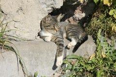 Junge Katze, die in der Sonne sich aalt Stockfoto