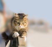 Junge Katze, die seine Greifer auf dem Zaun schärft Lizenzfreie Stockbilder