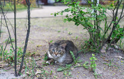 Junge Katze entspannen sich aus den Grund an der Landseite Stockfotos