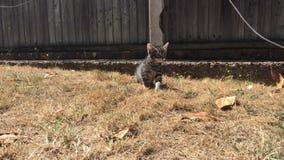 Junge Katze im Garten stock footage