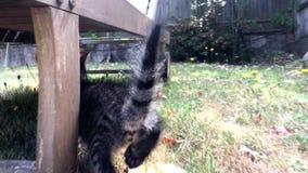 Junge Katze im Garten stock video