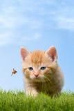 Junge Katze mit Marienkäfer auf einem grünen Feld stockbild