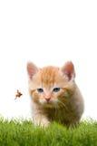 Junge Katze mit Marienkäfer auf einem grünen Feld Lizenzfreie Stockfotografie
