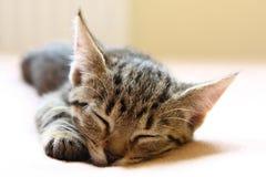 Junge Katze Schlafens Lizenzfreies Stockbild