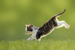 Junge Katze springt über eine hintergrundbeleuchtete Wiese lizenzfreie stockfotografie