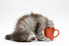 Junge Katzespiele mit einem Cup stockbild