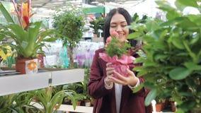 Junge kaukasische Frau wählt Blumen in den Töpfen Kindertagesstättenhauptblumen Langsame Bewegung stock video