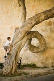 Junge klettert oben auf merkwürdigem geformtem Baum Lizenzfreie Stockbilder