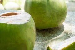 Junge Kokosnüsse stockfotos