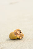 Junge Kokosnuss auf Sand stockbilder