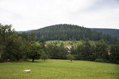 Junge Kuh, die Lebensmittelgras am Ackerland an der Landschaft steht und isst Lizenzfreie Stockfotos