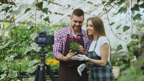 Junge lächelnde Bloggerpaargärtner im Schutzblech, das Blume ungefähr sprechend hält und notierendes Video- Blog für on-line--vlo Stockfotos