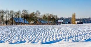 Junge Lavendelanlagen bedeckt mit Schnee Lizenzfreies Stockfoto