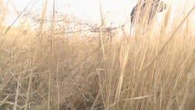 Junge läuft durch ein Feld, Gras, Schilfe, Jungenläufe weg von Eltern stock video footage
