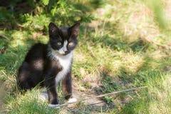 Junge männliche Katze schaut neugierig herum im Garten stockfotos