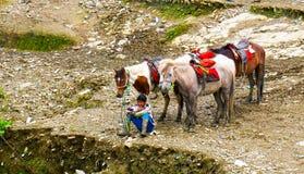 Junge mit den Pferden, die warten, um Fahrten zu geben Lizenzfreie Stockbilder