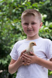 Junge mit einem kleinen Huhn Lizenzfreie Stockbilder