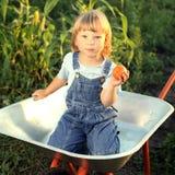 Junge mit einem Tomatengarten in einer Schubkarre Stockbild