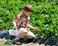 Junge mit einer Erdbeere Stockfoto