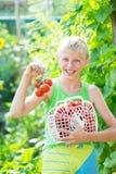 Junge mit einer Ernte von Tomaten stockfotos