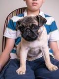 Junge mit Haustier Pug-Welpen stockbilder