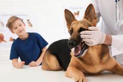 Junge mit seinem Haustierbesuchstierarzt Die Zähne Untersuchungshundes Doc. lizenzfreie stockfotos