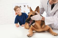 Junge mit seinem Haustierbesuchstierarzt Die Zähne Untersuchungshundes Doc. lizenzfreies stockbild