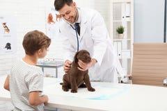 Junge mit seinem Haustierbesuchstierarzt Untersuchungswelpe Doc. stockfotos
