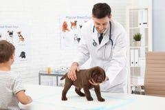 Junge mit seinem Haustierbesuchstierarzt Untersuchungswelpe Doc. lizenzfreies stockbild