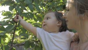 Junge Mutter, die ein Baby auf Händen während Baby gerade isst Kirschen vom Baum hält stock video footage