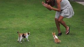 Junge nette Frau spielt aktiv mit zwei Kätzchen auf Grasyard am Sommertag stock video footage