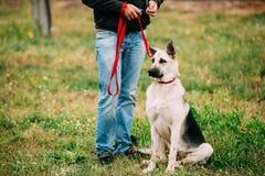 Junge osteuropäische Schäfer-Dog Sitting At-Füße des Inhabers im Freien lizenzfreie stockbilder