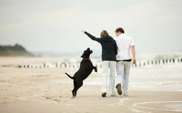 Junge Paare, die auf Strand mit Hund spielen Stockfotografie