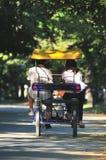 junge Paare, die Tandemfahrrad im Park antreiben lizenzfreie stockfotografie