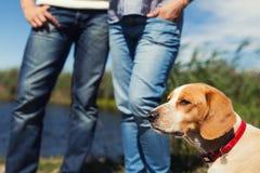 Junge Paare mit Hund Stockbilder