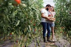 Junge Paare von den Landwirten, die im Gewächshaus arbeiten lizenzfreies stockfoto