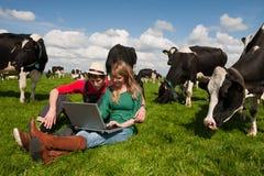 Junge Paarlandwirte auf dem Gebiet mit Kühen Lizenzfreie Stockfotos
