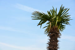 Junge Palme Stockfotos