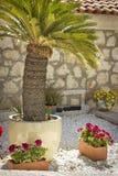 Junge Palmen Stockbild