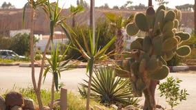 Junge Palmen und Kaktus stock video