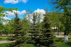 Junge Pelzbäume im Garten Lizenzfreie Stockfotos