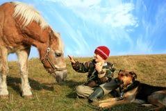 Junge, Pferd und Hunde Stockfoto