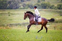 Junge Reiterfrau, die auf Braune auf Wiese galoppiert Stockfoto