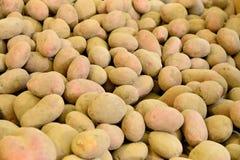 Junge rosa Kartoffeln liegt im Speicher Lizenzfreie Stockfotografie